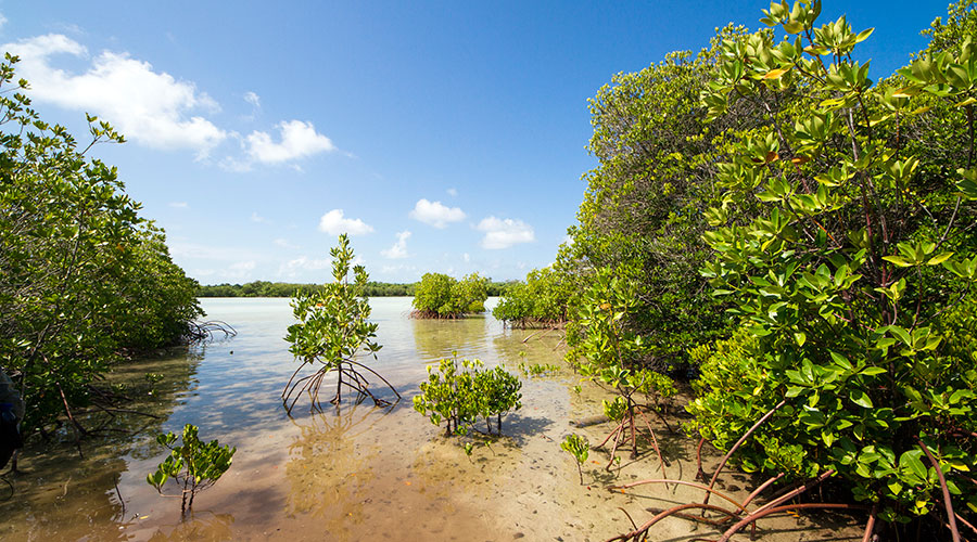 Only a limited scientific work has been carried out to study these vital ecosystems. Moreover, these mangrove habitats are under considerable threats, including; land reclamation, pollution, clearing for timber and climate change and sadly these activities threatening their existence.
