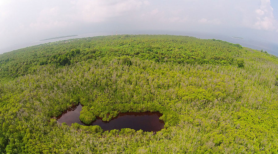 The wetland area of Neykurendhoo is continuous on the eastern side of the island; majority of the wet land area is inaccessible due to thick vegetation.